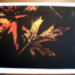 http://www.etsy.com/listing/56949297/cards-two-fall-leaf