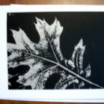http://www.etsy.com/listing/56999448/note-card-silver-leaf-on-black